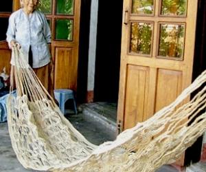The cornfield hammock